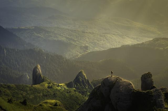 47 Great Nature Blog Names