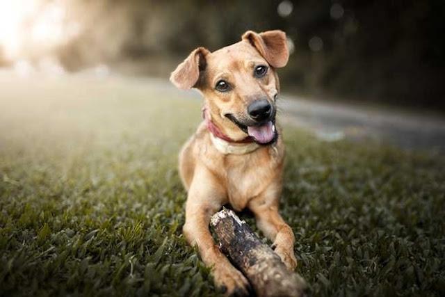 Evde Köpek beslemek caiz midir?