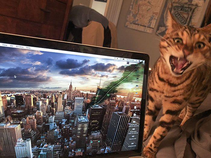 tingkah usil kucing (reddit.com/bengalguy)