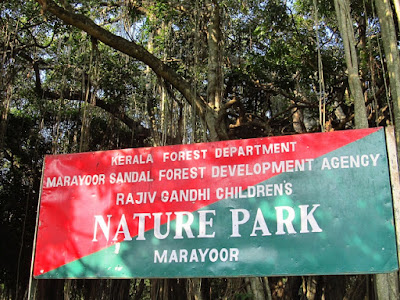 Only Natural Sandalwood Forests in Kerala Marayur