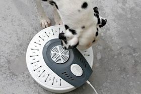 Dalmatian dog sniffing food dehydrator full of dog treats