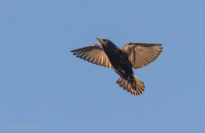 Canon EOS 7D Mark II / 400mm Lens (Wide Zone AF for Birds in Flight)