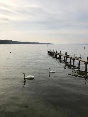 view lake Ammersee, nature, lake, Bavaria