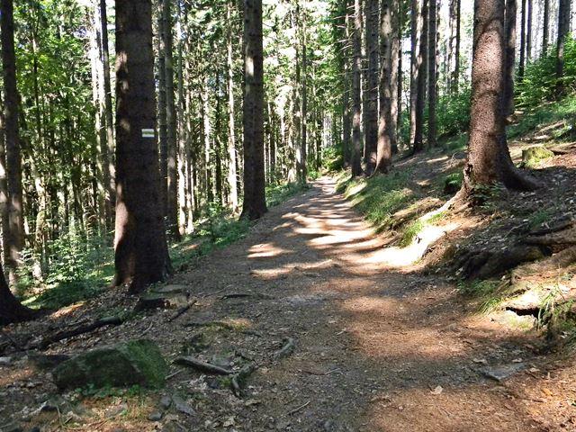 Igliczna, las, trasa, Kotlina Kłodzka