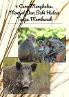 5 Cara Menghalau Monyet Dan Babi Hutan Tanpa Membunuh