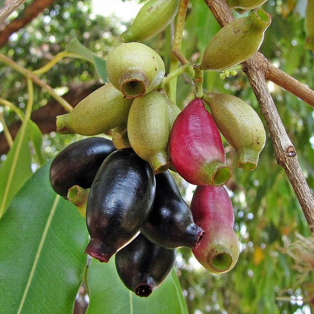 desktop bangladesh fruits pictures - photo #33