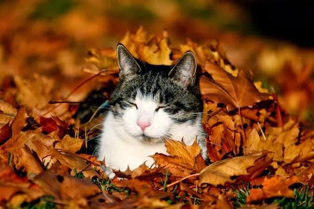 Bom Dia Cat: Esteira De Letras: Bom Dia Outono