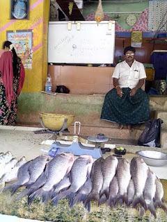N.SHANMUGAM fish stall TIrupati