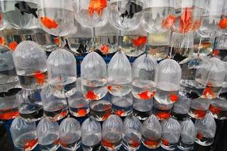 Prospek Toko Ikan Hias, Analisa Bisnis Menguntungkan