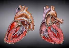 Bagaimana Cara Menjaga Kesehatan Jantung