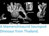 https://sciencythoughts.blogspot.com/2012/02/mamenchisaurid-sauropod-dinosaur-from.html