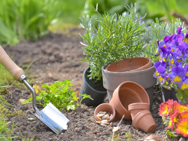 Lawn Care 101: Common Problems and Their Easy Fixes