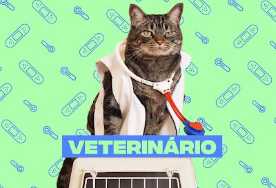 Quando levar o gato ao veterinário?