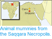 https://sciencythoughts.blogspot.com/2019/02/animal-mummies-from-saqqara-necropolis.html