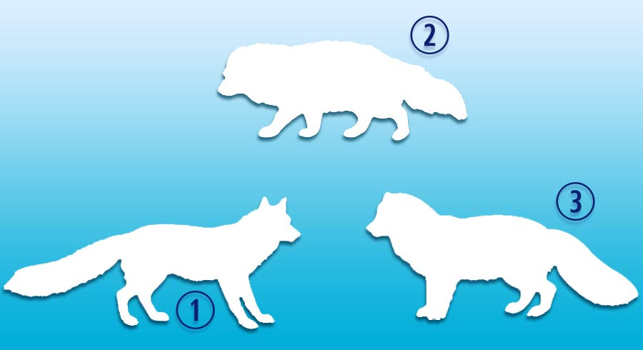 Test: Elige al animal más fuerte