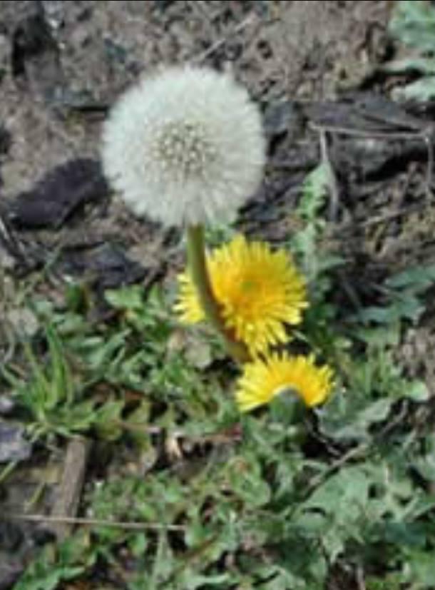 Tribulus terrestris, la pianta afrodisiaca per migliorare la sfera sessuale - Paginemediche