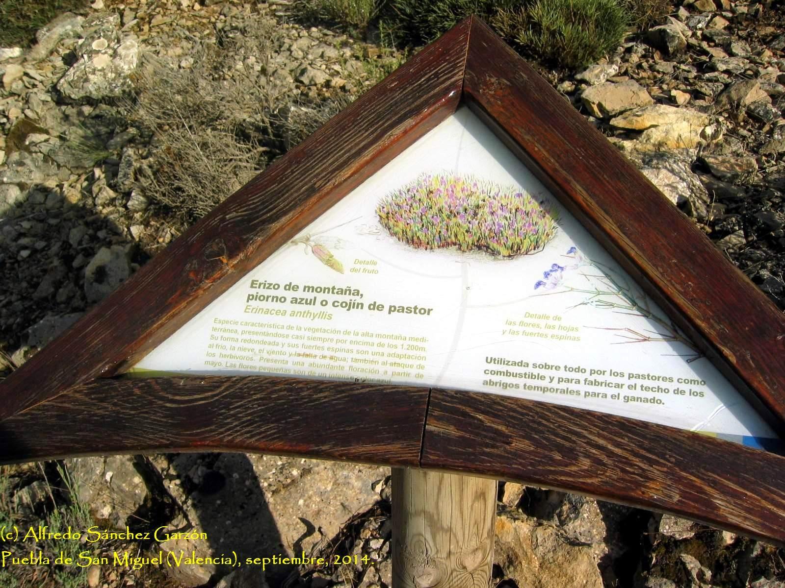 puebla-san-miguel-erizo-montaña