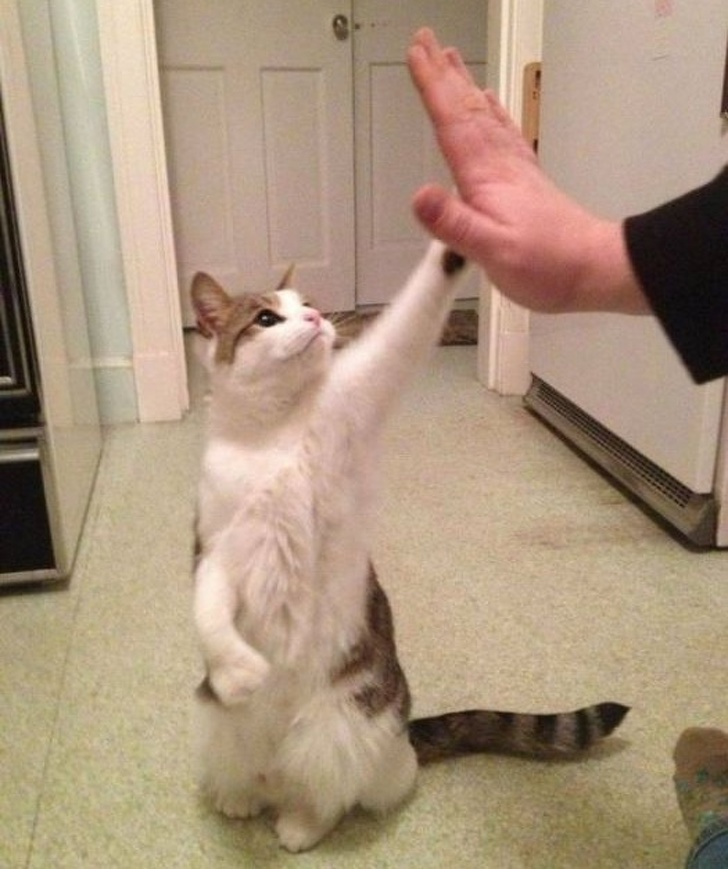 5. Give me a high five!
