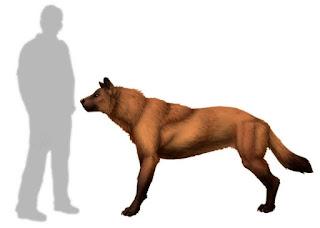 Comparación tamaño Epicyon haydeni con humanos
