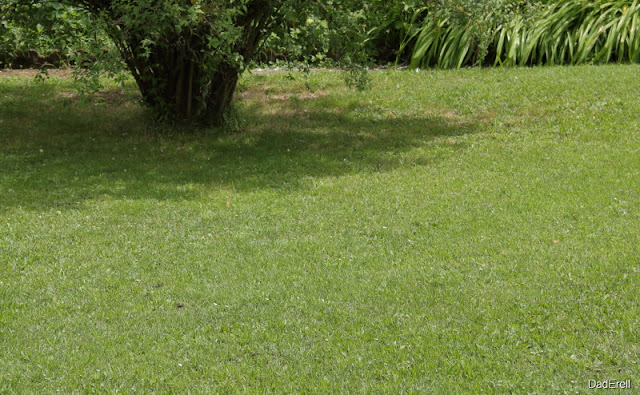 Pelouse d'herbe verte