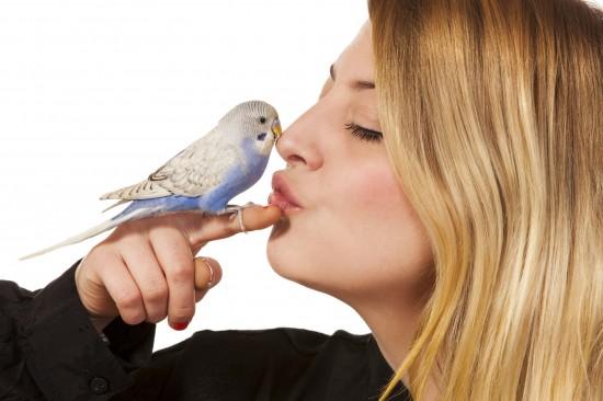 Belajar Cara Merawat Burung-Burung Peliharaan