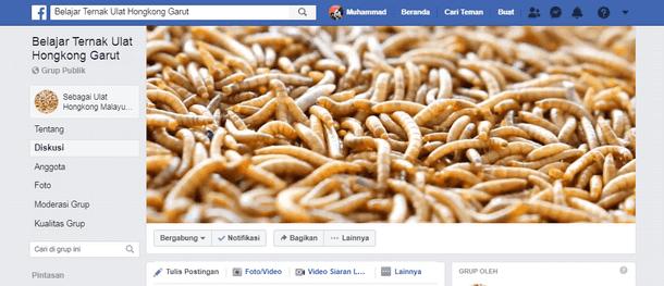 Belajar Ternak Ulat Hongkong Garut Facebook Group