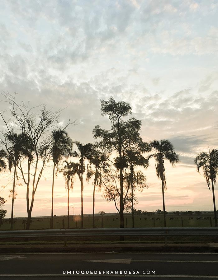 Coqueiros e outras árvores na beira da estrada para São Paulo, foto tirada durante o pôr do sol