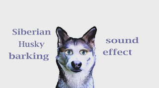 how husky barking