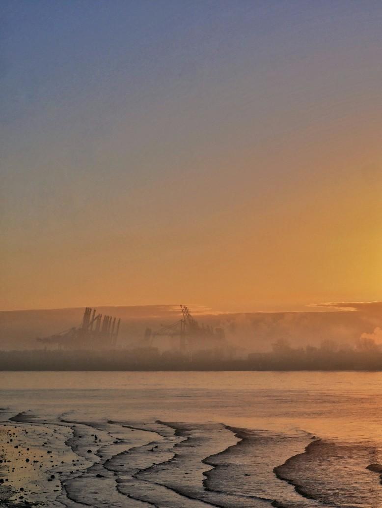 Elbe morgens, der frühe Vogel fängt den Wurm