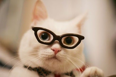 drôle de chat à lunettes