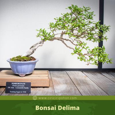 Bonsai Delima