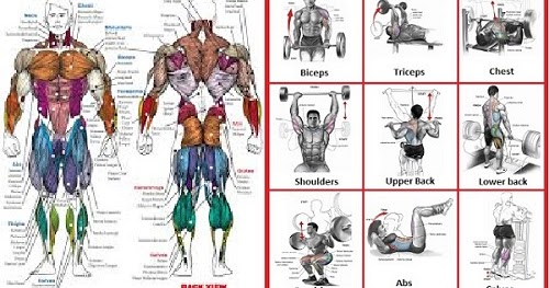 The best muscle building exercises for every body part