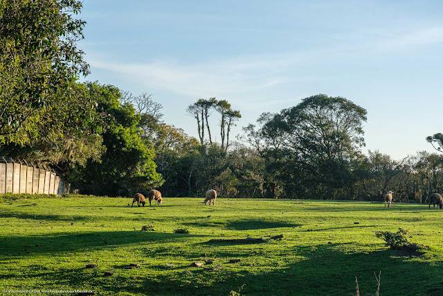 Terreno com ovelhas em Curitiba