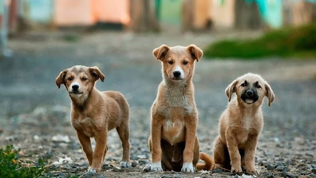 Πώς οι σκύλοι επικοινωνούν με τα αυτιά τους;