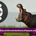 Ubuntu 21.04 Hirsute Hippo, un hipopótamo con los pelos alborotados.