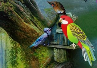 Fantasy World Parrot Escape