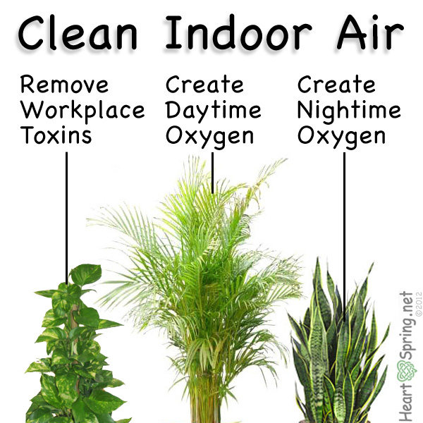 Open Your Windows Let Fresh Air Permeate Home The Add Houseplants Too They Can Help Clean Inside