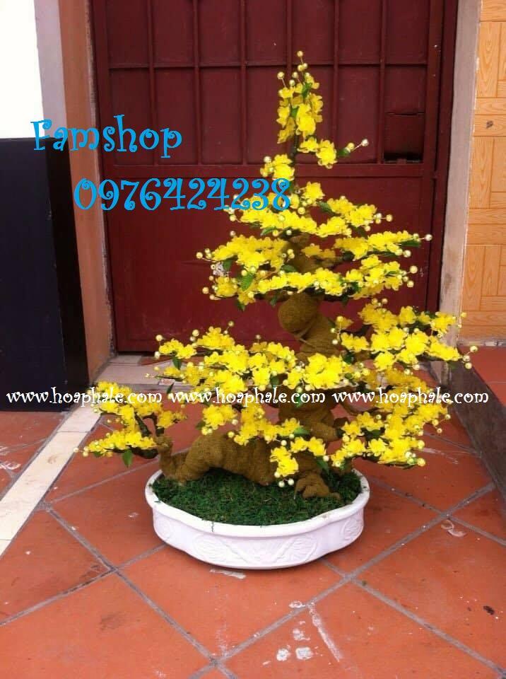 Goc bonsai cay hoa mai o Truong Cong Giai
