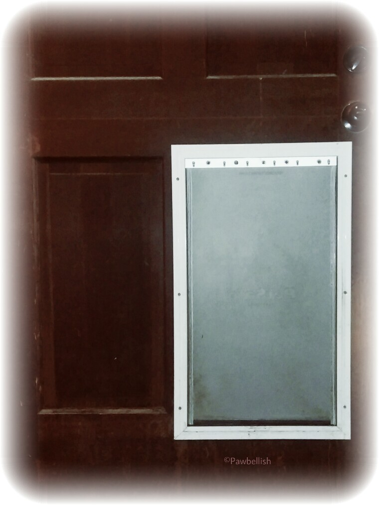 Dog door to allow your pet a way to enter a secure, fenced area when you are not available to potty them.