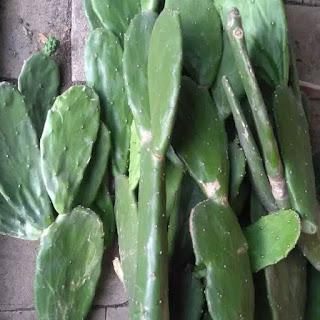 kaktus-centong-segar-murah.jpg