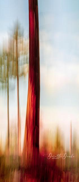 icm, gestische Fotografie, gestisch, intentional camera movement, art, artwork, abstractart