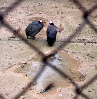 Πουλιά σε κλουβί birds in cage