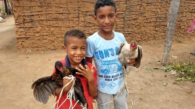 Meninos que pediram galinhas a Papai Noel ganham um ano de fornecimento de ovos