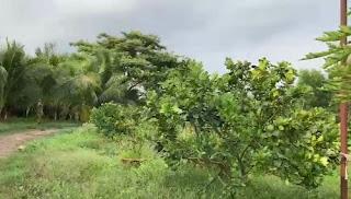 Bán 2 mẫu vườn trái cây thích hợp làm nghỉ dưỡng sau lưng có suối