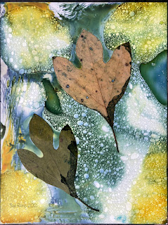 Wet cyanotype_Sue Reno_image 827