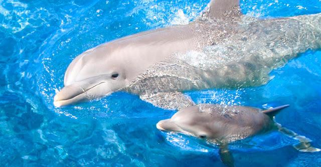 """Рибари спасиха малко делфинче, майката им """"благодари"""""""