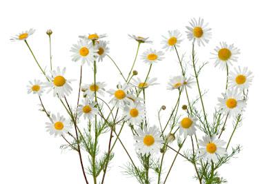 13 растений, которые помогут вам лучше спать