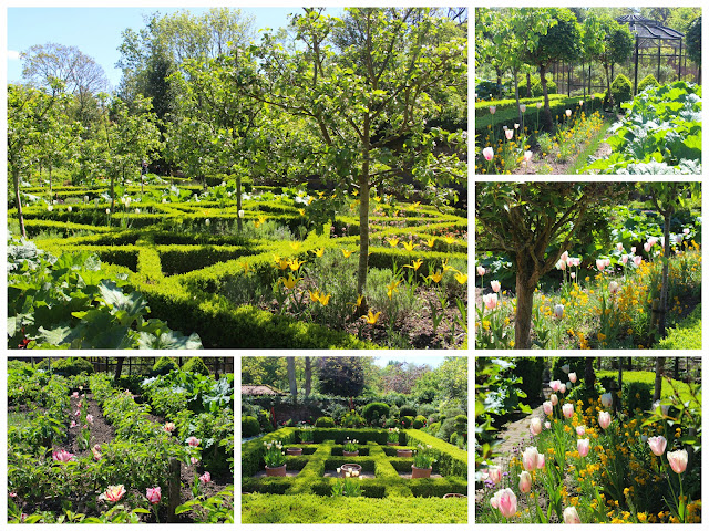 A collage of the tulip display at West Green House Gardeb