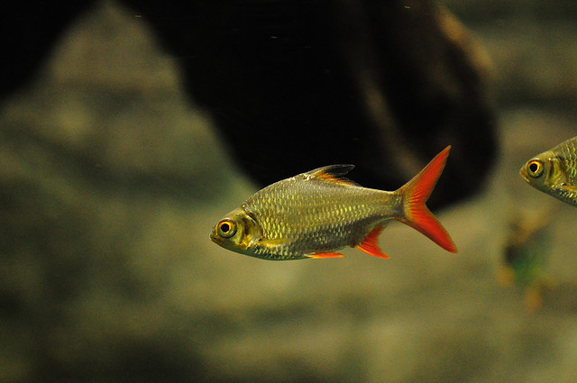 Tropical Fish Pictures Exotic Ornamental Fish Photos With Names