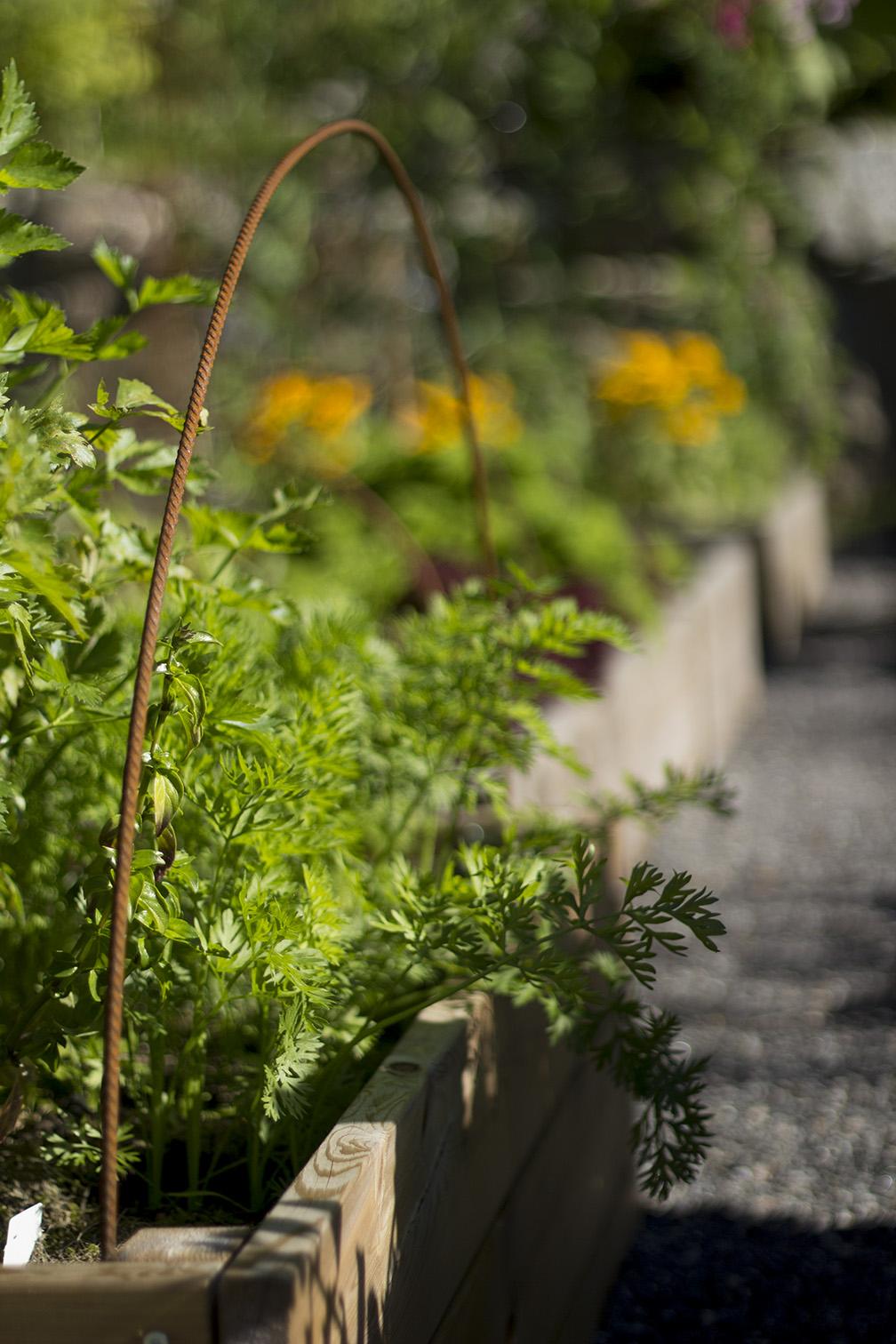 MinEden Trädgårdsblogg Puutarhablogi: Andras trädgårdar